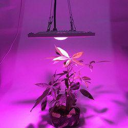 Impermeable IP65 espectro completo 300 W 600 W LED crece la luz para hidroponía invernadero LED lámpara adecuada para interior al aire libre plantas