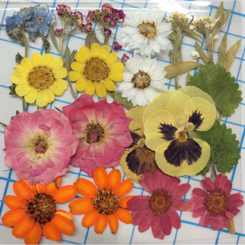 Mixed Dried flower bags press flower specimen free shipment wholesale 1 lot/10bags(200Pcs Flowers)