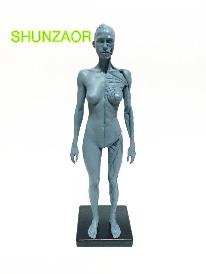 Ps4 SHUNZAOR 30 cm Hembra Humana Anatomía Modelo Dibujante skeleton Cabeza Del Cráneo Óseo Muscular Médica para la venta