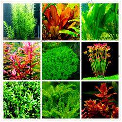 100 pcs/sac Aquarium Plantes Graines Herbe de Plantes Aquatiques D'eau À L'intérieur de Plantes Ornementales Herbe Graines pour La Maison Fish tank