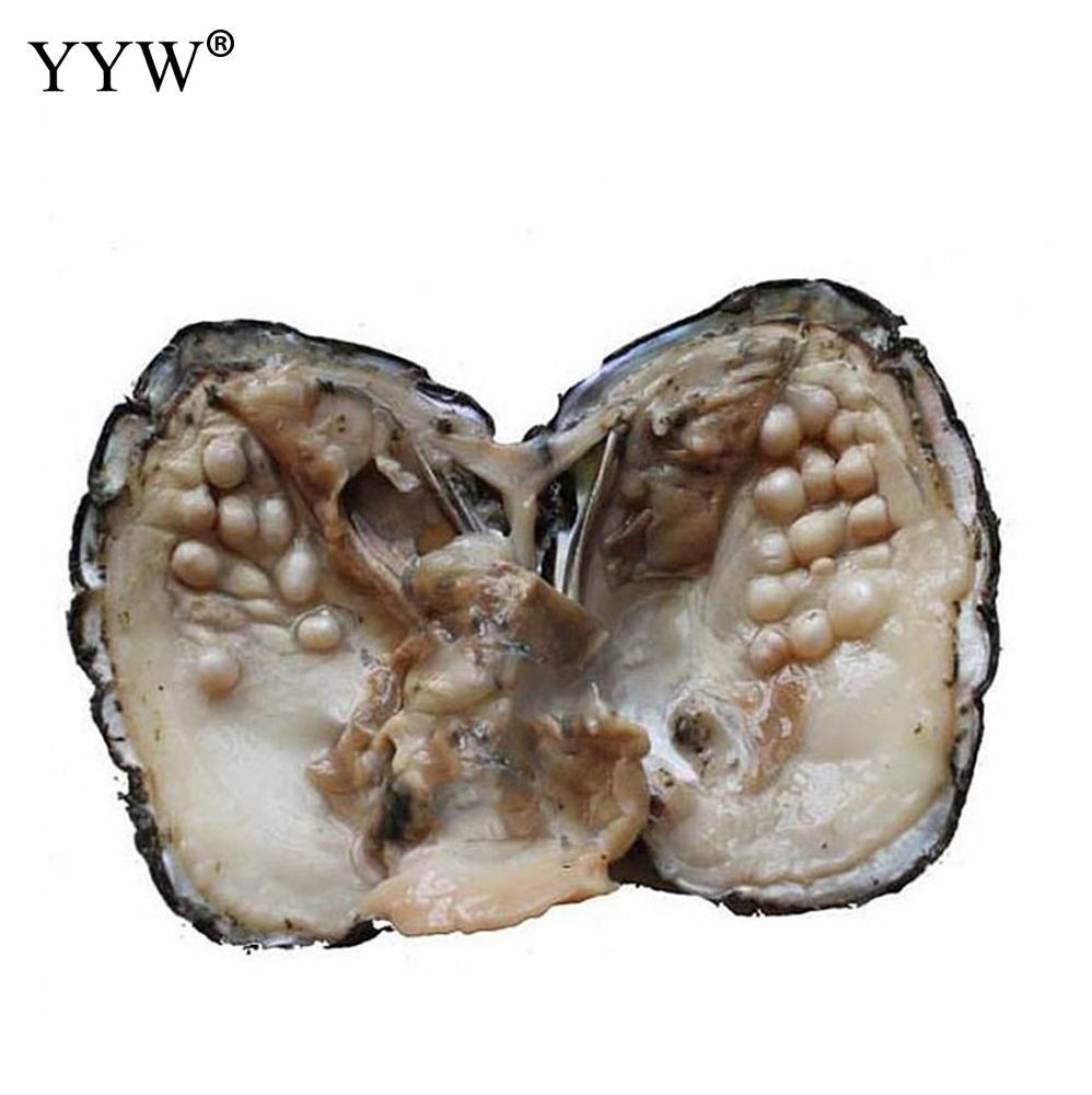 Süßwasser-zuchtperlen Liebe Wünschen Perle Oyster 5-7mm Verkauft Durch PC eine perle oyster mit über 25 perlen