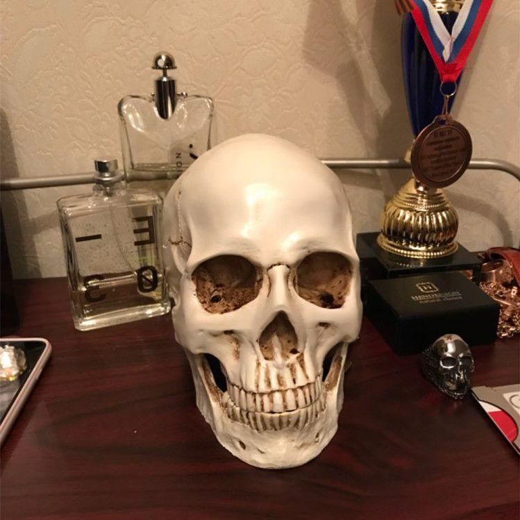 Human Head Resin Replica Medical <font><b>Model</b></font> Lifesize 1:1 Halloween Home Decoration High Quality Decorative Craft Skull