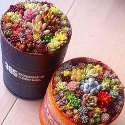 300 pcs/sac mixte lithops graines succulentes rares graines Cul graines de fleurs Pseudotruncatella Pierre Vivante bonsaï mini plante de jardin