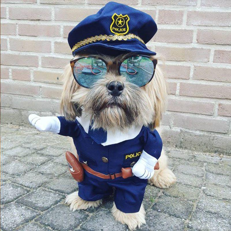 Drôle Chien Vêtements Cool Pet Chien Costume Costume Chiot Vêtements Manteau Vêtements Pour Chien Costume Tenue Infirmière Costume D'animal Familier Ropa perro 27S2
