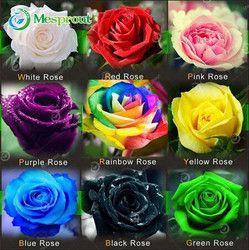 100 PCS Fleur Semences Hollande Rose Semences Amant Cadeau Orange Vert Arc-En-RARE 24 Couleur À Choisir La Maison BRICOLAGE Jardinage fleur