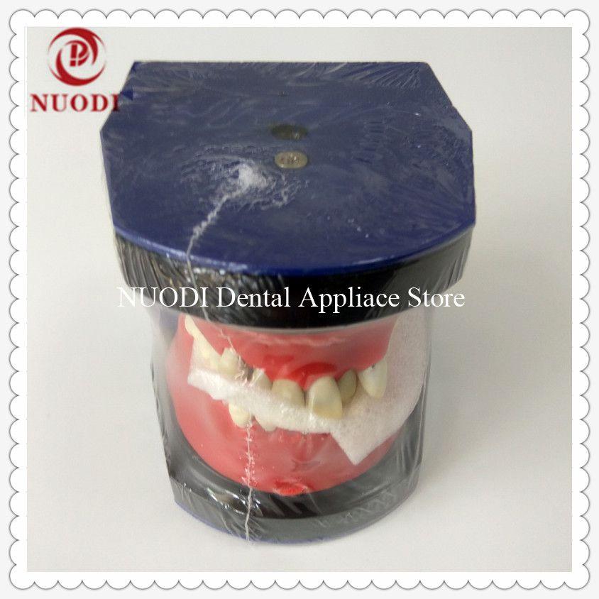 Dental Orthodontic traning teeth model/Typodont practice teaching teeth model/Metal Orthodontic Study teeth model