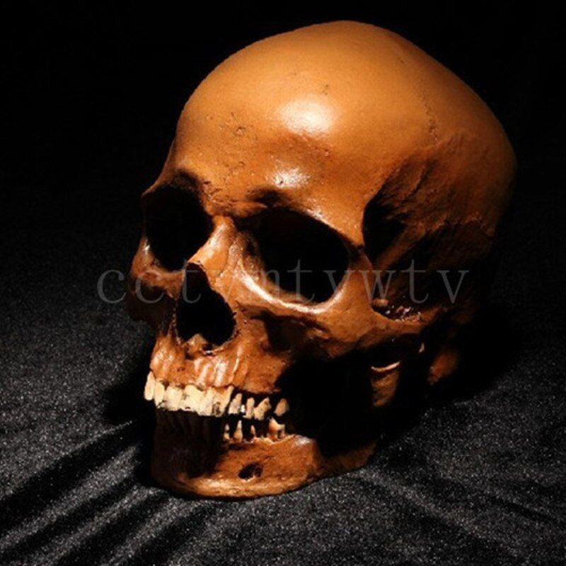 P-Flame Human Skull Replica Resin Crafts Model Medical Realistic Handmade Home Decoration Figurine Resin Statues For Decors