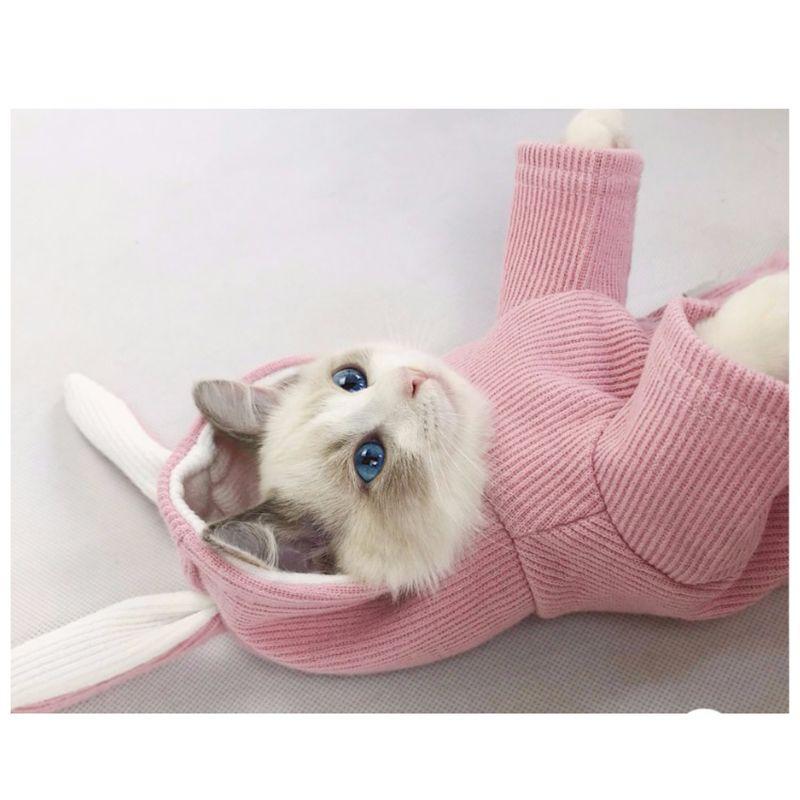 Neue Kaninchen Haustier Hund Katze Hoodie Kleidung 100% Baumwolle Herbst Sweatshirt Customes für Kleine Hunde Teddy Yorkie Chihuahua Kleidung