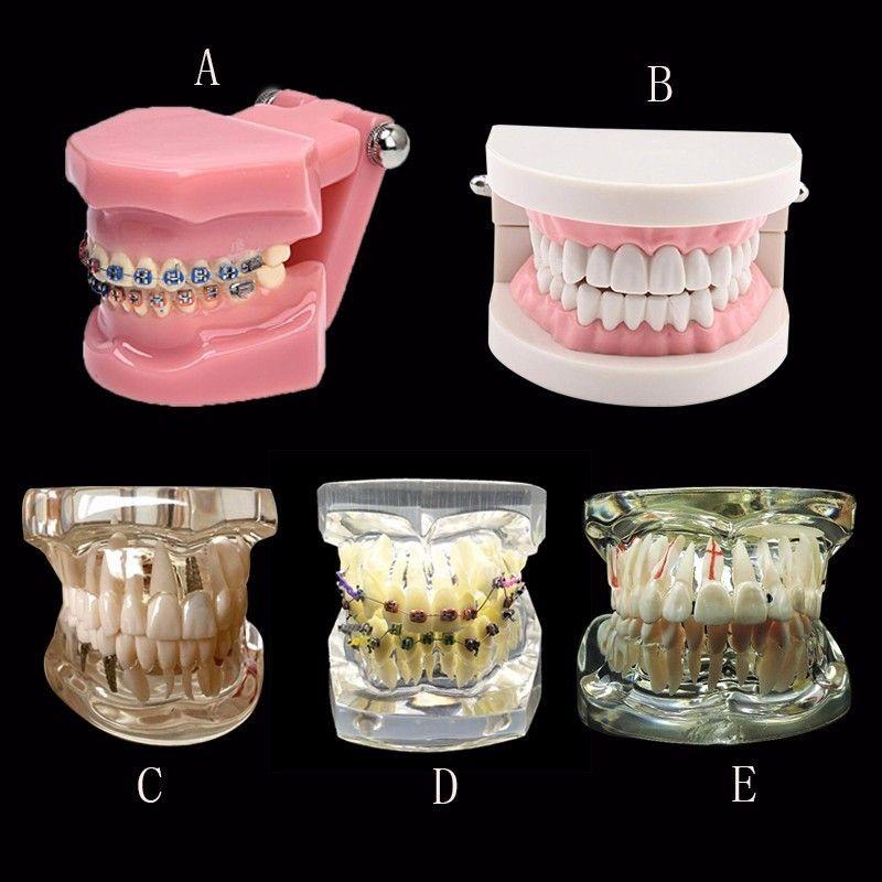 Divers Dentaire Dents Modèles Sont Utilisés Pour L'enseignement Et L'hôpital Dentiste Matériel