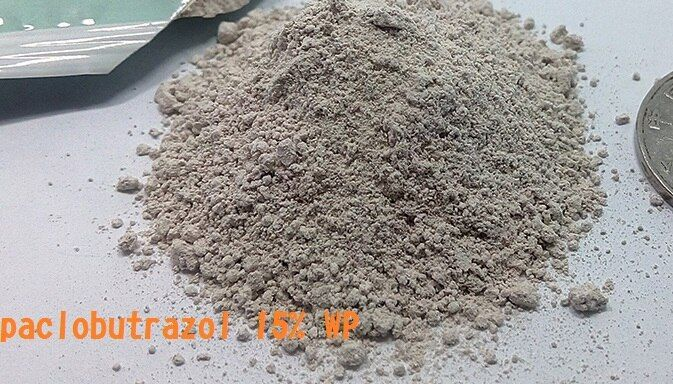 10 Сумки 10 grams/bag paclobutrazol 15% WP гигроскопичный порошок