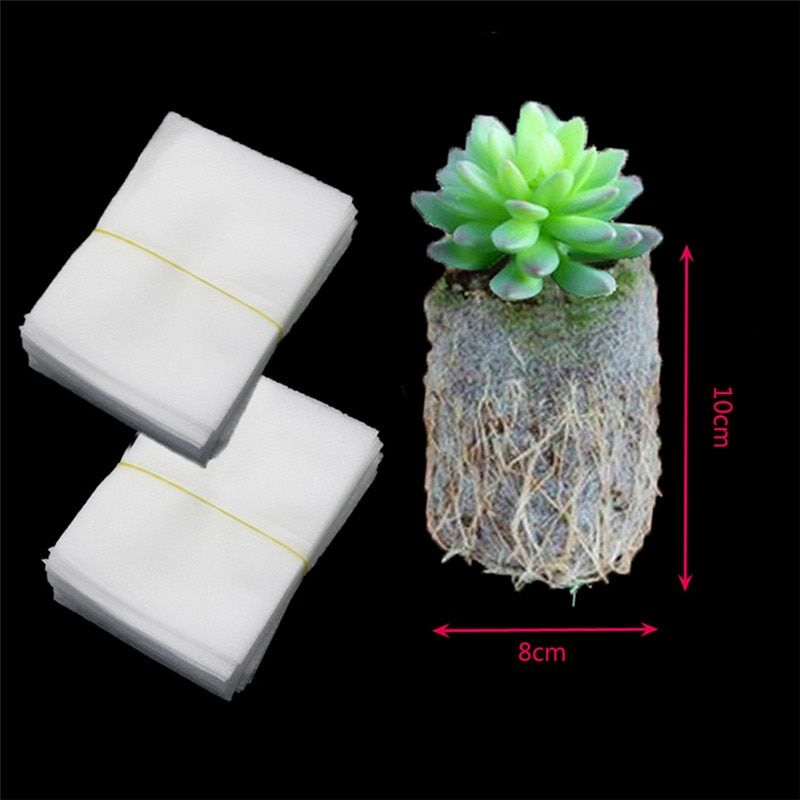 meikkmmsb80usd5colours Seedling tray vegetable flat plate non-porous forest transparent nursery tray baile li 8.13