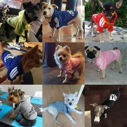 Nueva primavera Otoño Invierno Artículos para las mascotas ropa para perros mascotas Abrigos ropa del perro del perrito del algodón ropa para perros 7 colores xs-2xl