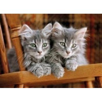 Παζλ Kittens HQ Collection (500 Κομμάτια)