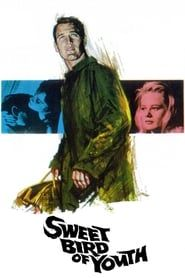 Sweet Bird of Youth (1962) Film Online Subtitrat
