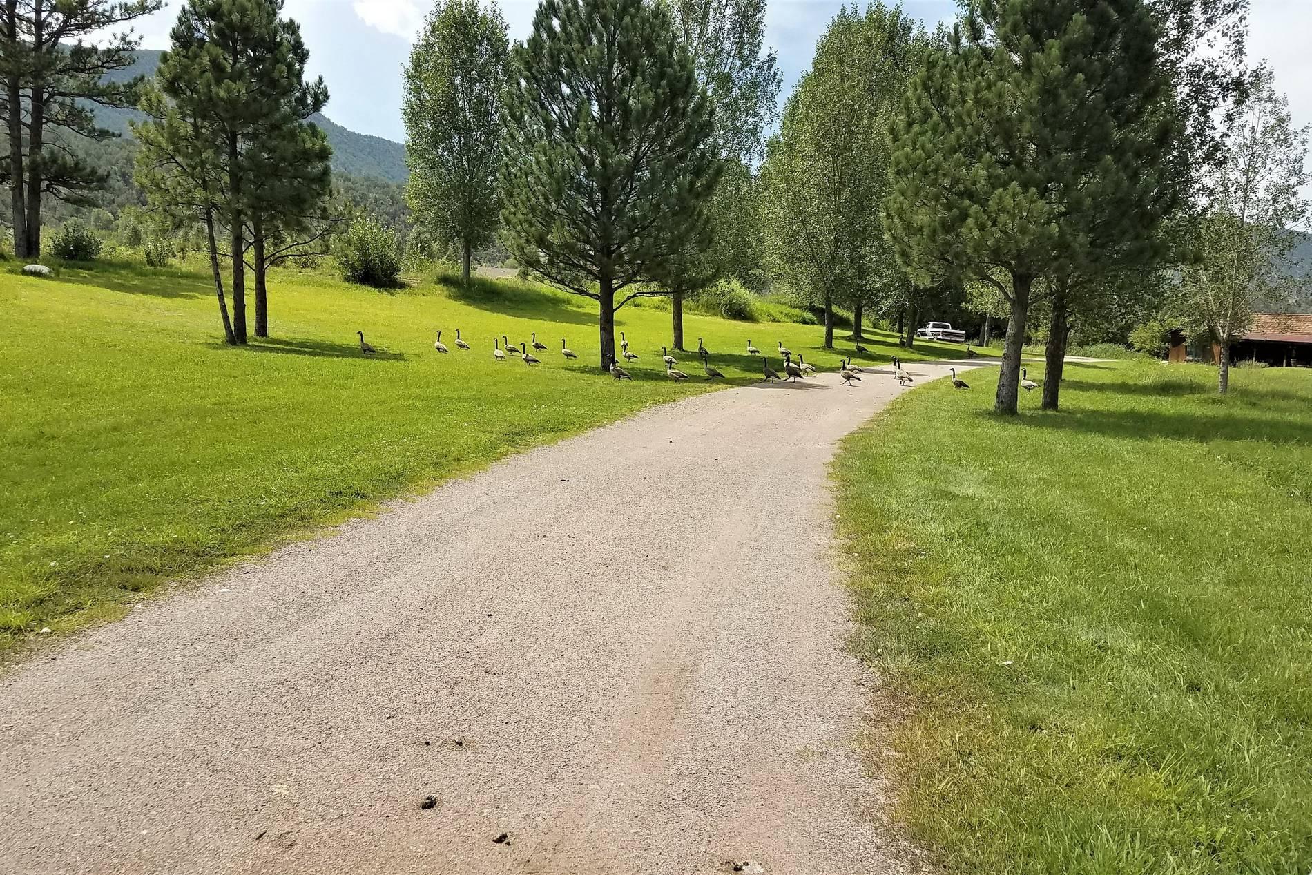0541 Coryell Ranch Road Carbondale Photo 8