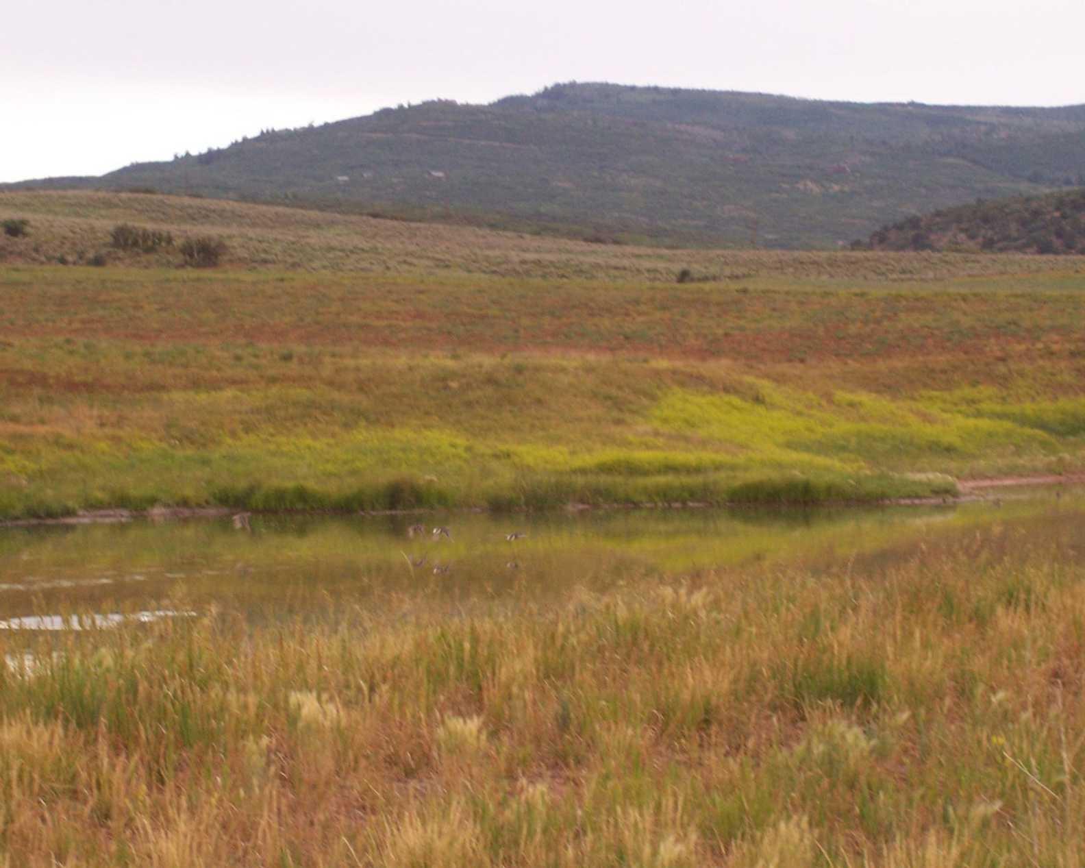 TBD Cattle Creek Ridge Carbondale Photo 3