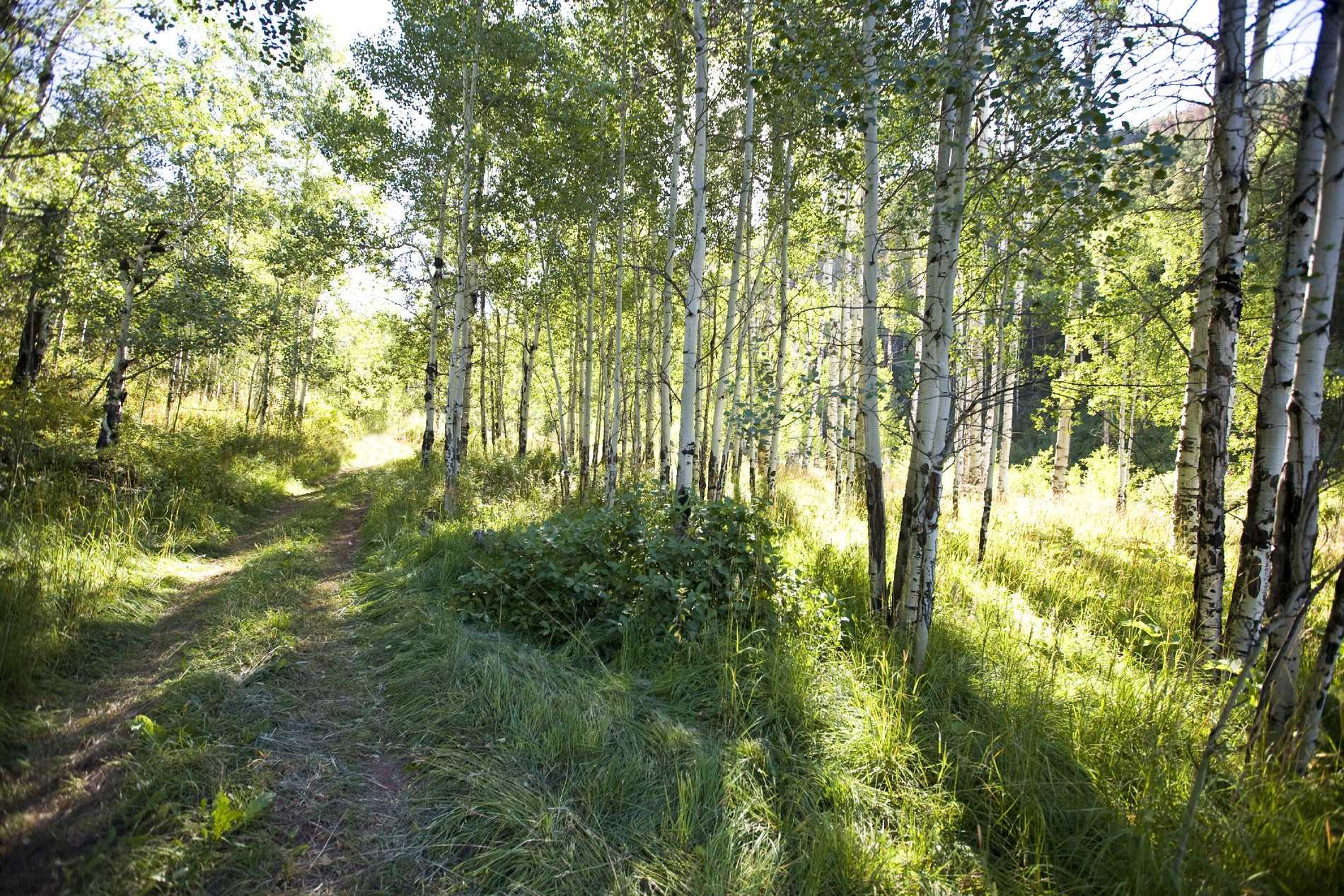 3045 Woody Creek Road Woody Creek Photo 2