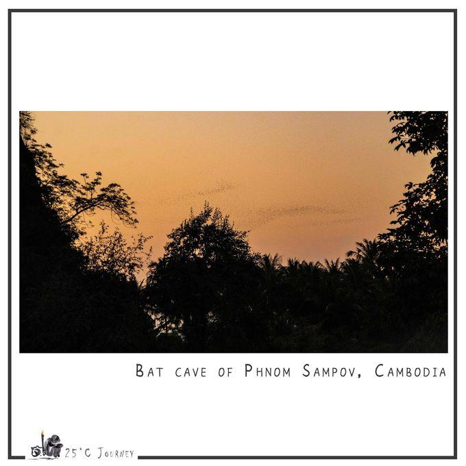 【25°C 旅遊:柬埔寨】馬德望的蝙蝠可遠觀而不可食用