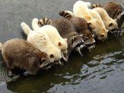 [花蓮景點] 超萌動物之旅 新光兆豐休閒農場親親浣熊與樹懶 鯨世界出海...