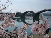 櫻花觀光 名勝 山口縣 名橋 錦帶橋 沿岸3千棵櫻花 美景如畫