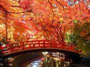 關西攻略 京都人氣紅葉 楓葉 北野天滿宮 梅花 供奉學問之神 神社