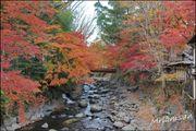 日本第一紅葉美景 修善寺散步 桂川旅館 感受紅葉竹林的美