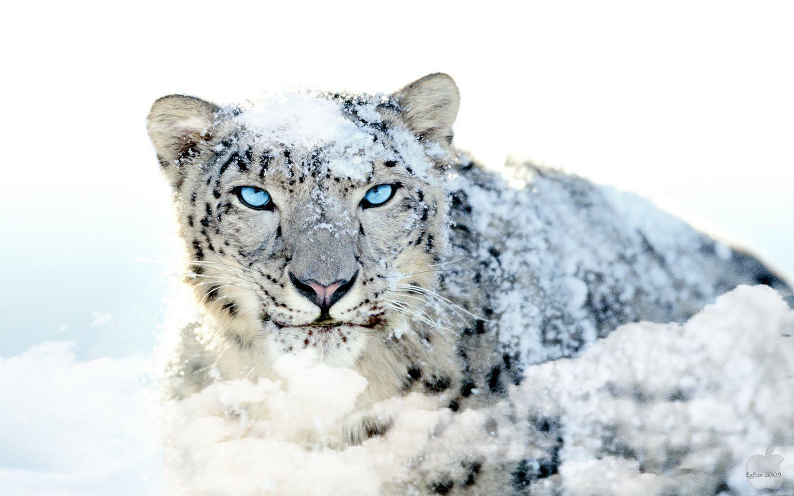 רקעים של שלג וקור - איכות HD