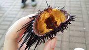 食在香港 西貢碼頭 品嚐 原隻新鮮 即開 海膽!西貢海旁廣場就有得食啦!