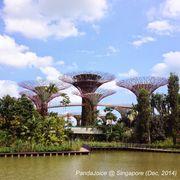 游新加坡: 不可錯過的濱海灣花園 和 平民購物商城