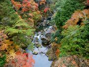 奧多摩的名勝景點「鳩之巢溪谷」於11月將迎接紅葉盛開期!綿延山谷的奇岩...