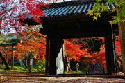 福岡 小京都 秋月 歷史風情的街道上 正值賞楓的最佳時機