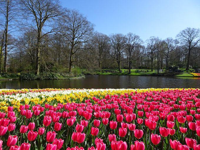 [荷蘭景點] 全球最大鬱金香花園 Keukenhof交通與門票 尋找七彩花田