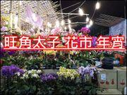 旺角 豬年年宵 2019 花墟 年宵 小吃 美食 熟食 乾貨 年花 濕貨區 芒果 煎...