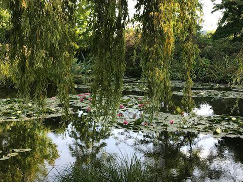 法國印象派大師Monet莫內-莫內花園@Giverny 吉維尼