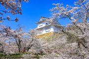 石牆上俯瞰的櫻花美不勝收 津山城(鶴山公園)知名賞櫻景點100選