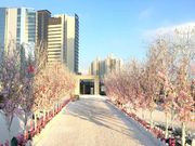 【新春好去處】D2 Place天台桃花陣 粉紅祈福許願樹