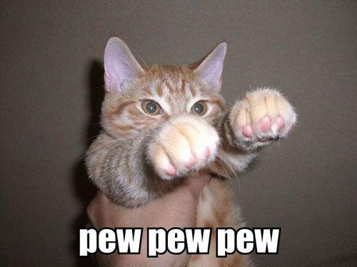 [Image: funny+cats1.jpg]