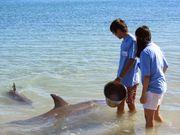 2.18零距離,親親小海豚
