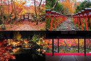 4個精選 京都 紅葉美景 至11月下旬 迎來賞楓最佳時機