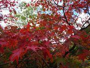 [首爾景點] 秋季紅葉之旅 韓國最火紅名山 KKday內藏山一日遊