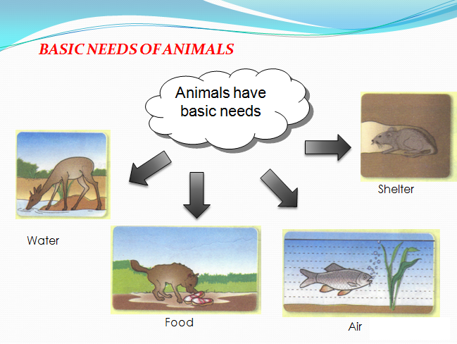Image result for basic needs of animals