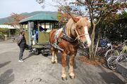 九州攻略 由布院 搭乘觀光馬車遊 慢活細賞獨特風景