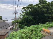[九州景點] 隱世小島深島 與過百喵星人為伴之可愛貓島