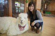 [大阪景點] 天保山室內動物園 親親小動物與草泥馬