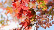 最終更新 11.17!日本 紅葉 追楓 情報 2014 攻略 最前線 京都 大阪 和歌山...