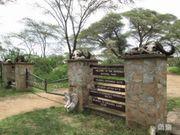 《非洲草原行》之一