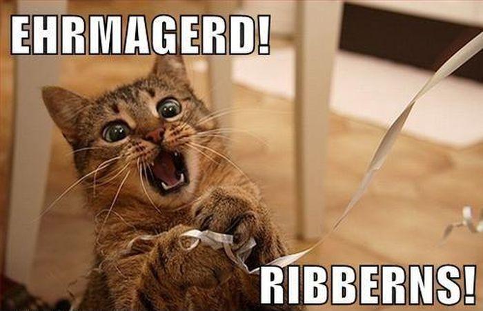 [Image: cat_memes_05.jpg]