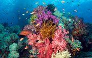 沖繩聞名珊瑚海域 石西礁湖 全日本最大的珊瑚礁 發現了約200種之多