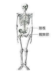 【運動】為何你不該彎腰