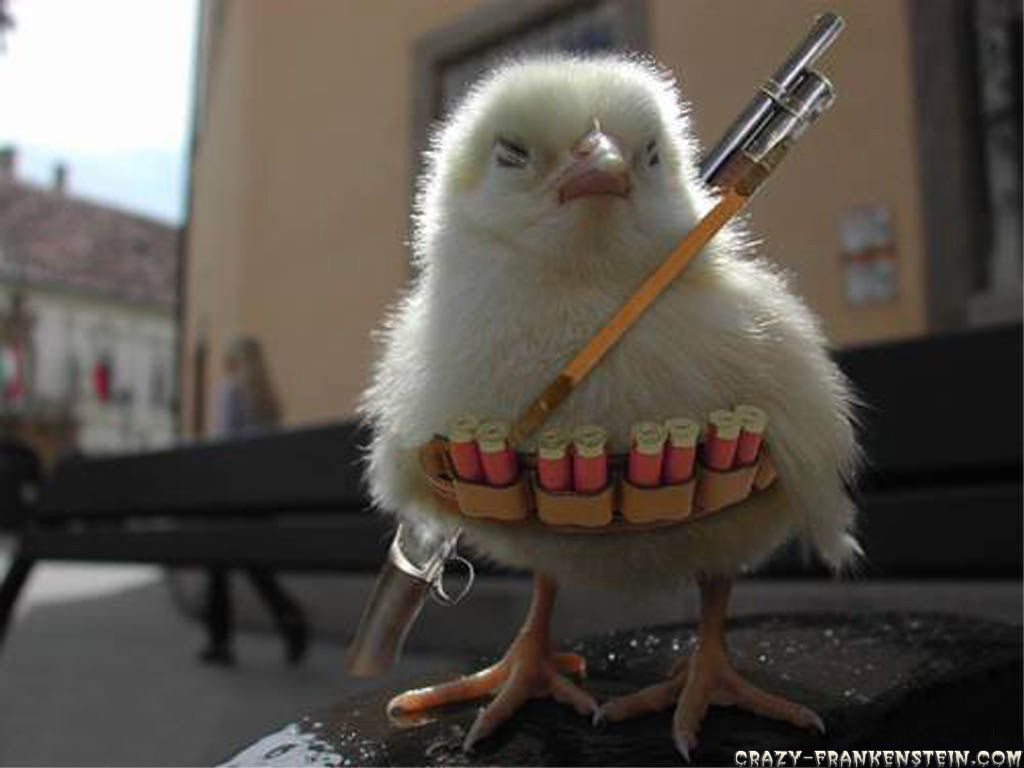 [Image: funny-wallpapers-chicken-war.jpg]